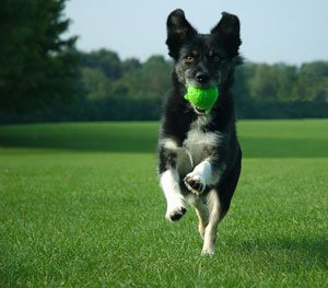 My dog playing fetch in Central Park
