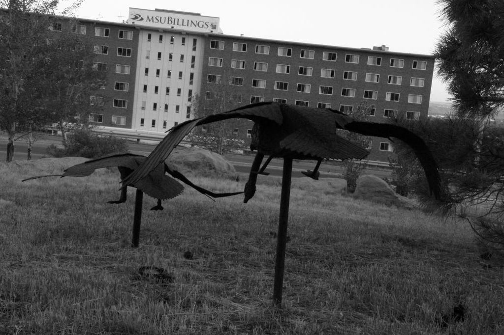 MSU Billings Swan Scultptures in front of Dorm Building Black and White