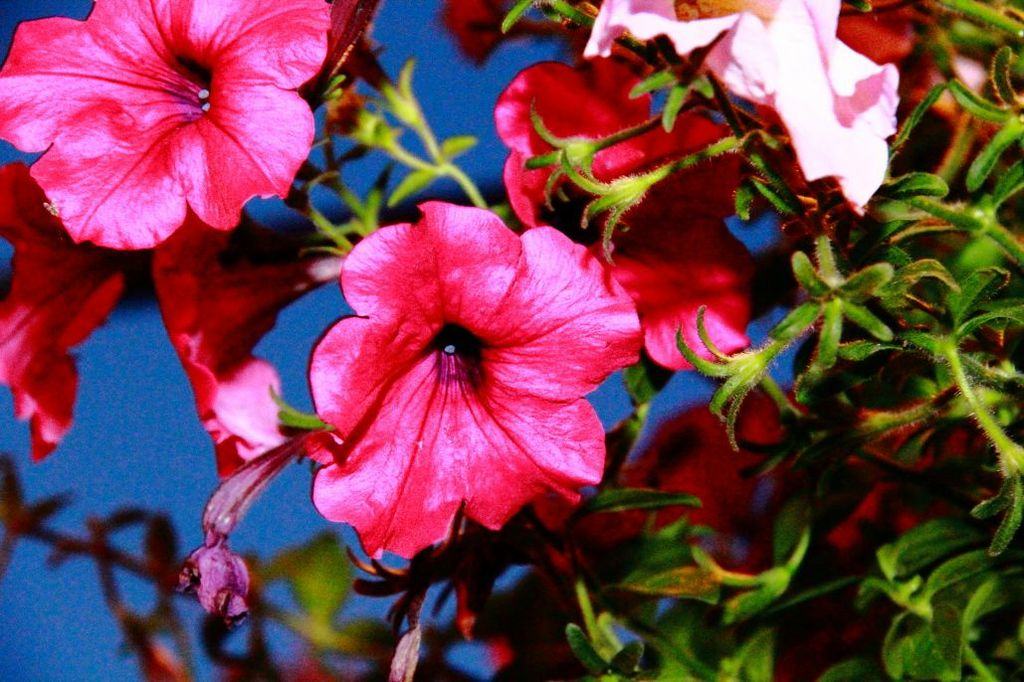 Pink flowers background image