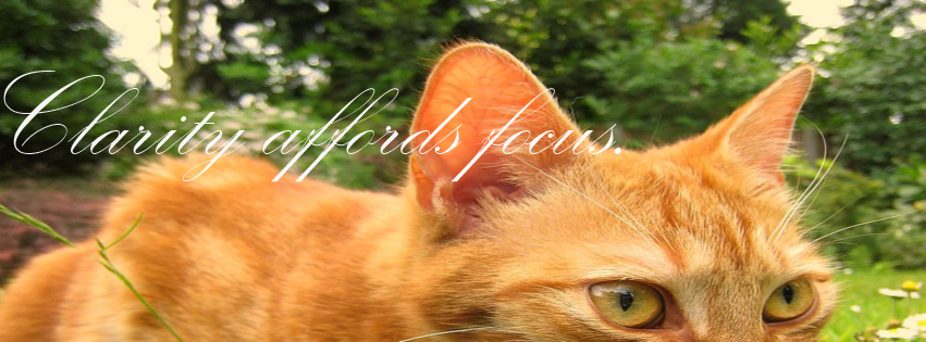 Clarity Affords Focus Cat Facebook Covers