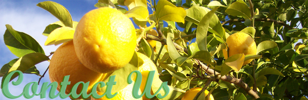 Contact Us lemons orchard fruit Free Banner Website Design Billings Montana by SkyPoint Studios