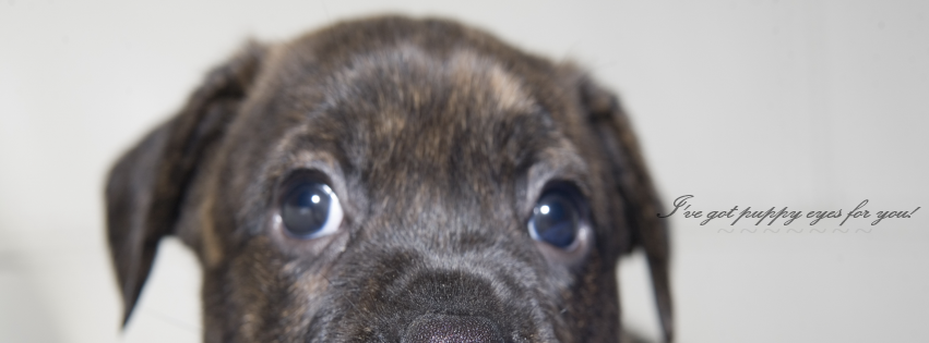 Puppy Eyes For You Facebook Covers