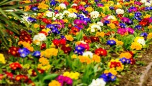 Spring Flowers Lots of Colors Google+ Covers
