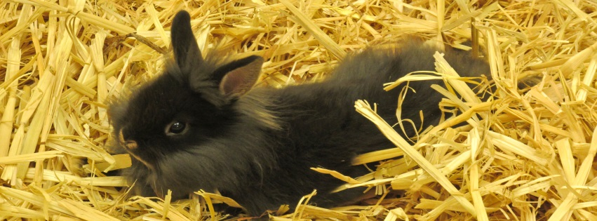 Cute Grey Bunny in Hay Easter Facebook Covers