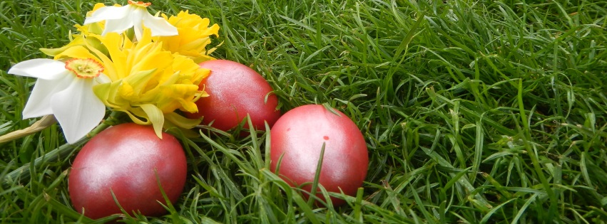 Eggs and Chick in Grass Easter Facebook Covers