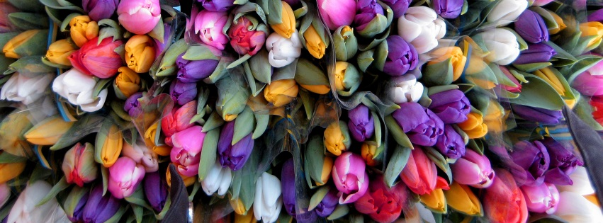 Tulips and Tulips and Tulips Easter Facebook Cover
